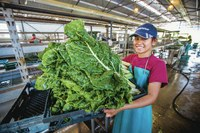 Waianae farm steps up growth of produce and college grads